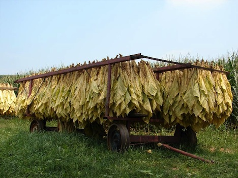 tobacco-solar