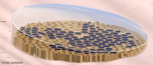 Thomas Laureyssens, Diatom Project, Abu Dhabi, LAGI2010, diatom, algae, crude oil, solar power, renewable energy, public art, green design, land art generator initiative